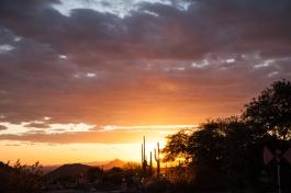 Phoenix2016-59