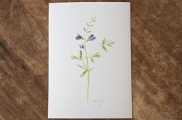 wildflower-baptista-1