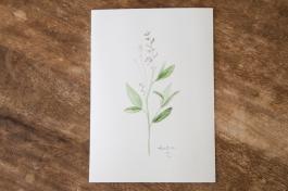 wildflower-flowering-sage-1