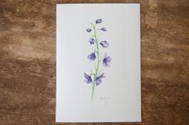 wildflower-larkspur-1