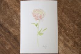 wildflower-peony-1
