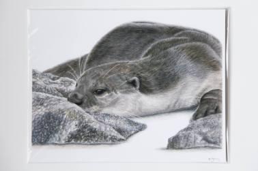 Kit Gray Illustration - kitgrayillustration.com